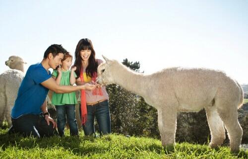 新西兰留学五大热门专业